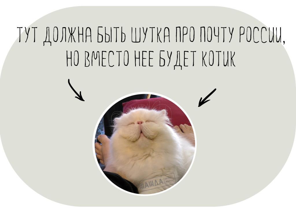 Котик вместо шутки