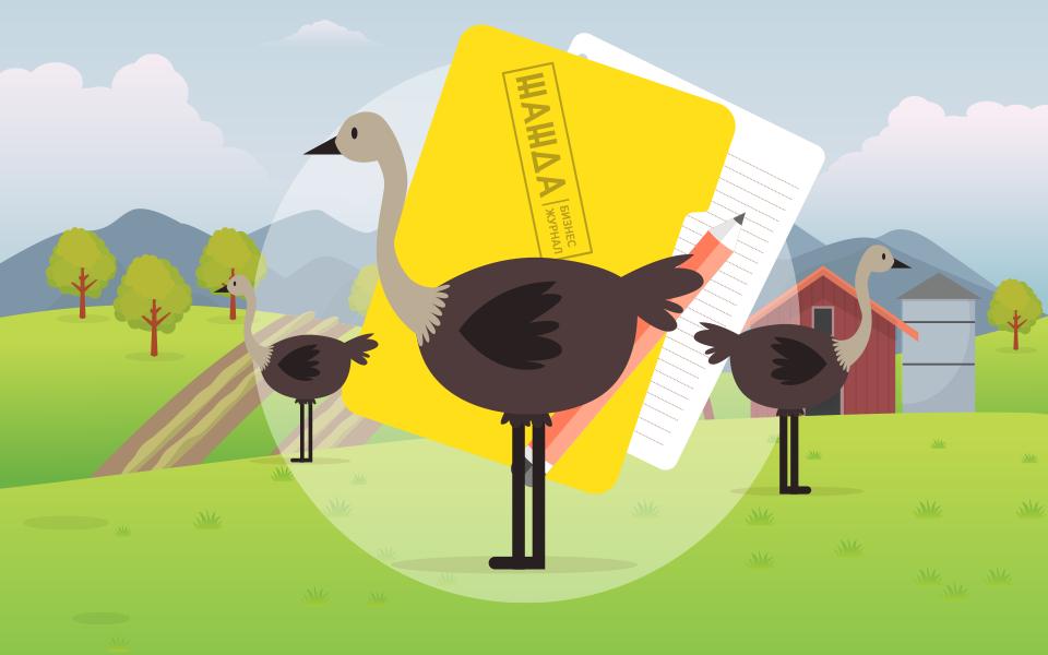 Разведение страусов в домашних условиях: пошаговый бизнес план